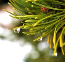 waterdrops 2. by tamiath