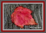 Fall Leaf by elinda58