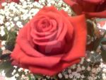 red roses with other flowers by blackroselover
