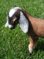 Needle Felted Nubian Goat by CVDart1990