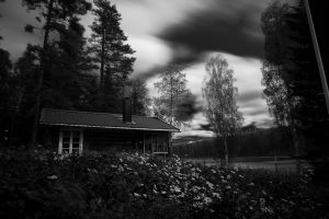 Windy day in the woods by Sjodin