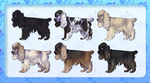 5Opoints Cocker spaniel adopts by borzoi-lover