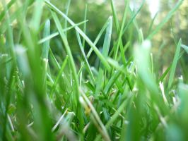 Grass by Isteelurfoodz