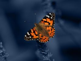 Butterfly Wallpaper by Sommersprotte