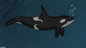 Shade the Orca by CrazyWhiteArabian