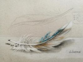 Realistic Feather drawing in color pencil by Lineke-Lijn