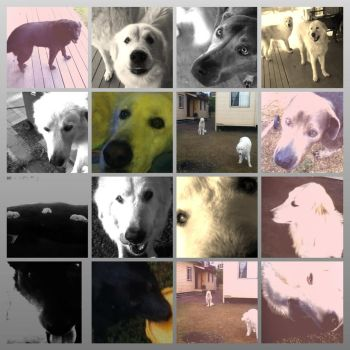 Puppy Photo Collage 2 by Lish7890