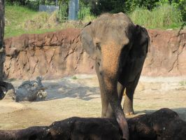 Stock: Elephant by equizotical