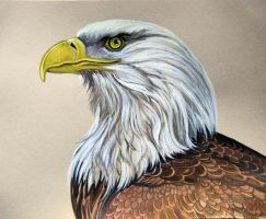 Eagle Nobility by HouseofChabrier