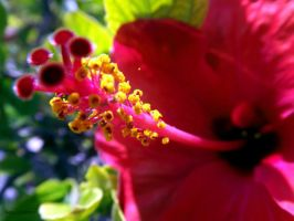 Red and yellow by asiaibr