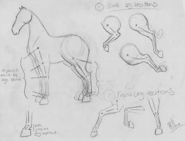 Horse Legs Tutorial by WhyteHawke