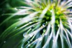 Water Drops by relax90