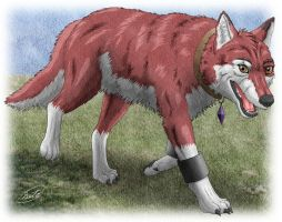 Baltro : Walking Red Wolf by SheltieWolf