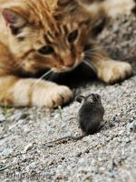 the cat and the mouse II by 21CenturyBD