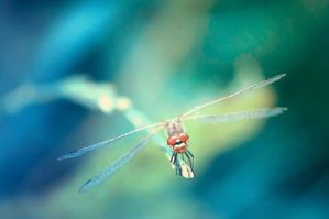 Dragonfly16 by NRichey