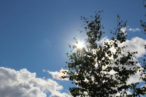 Sun through the trees 3 by LunaticNate