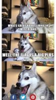 Punny Dog by AnBlonde