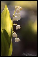 Teeny tiny bells by yenna-photo