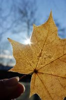 Frozen October leaf by Beccis1995