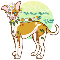 Ibizan Plant Pup by Toucat