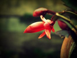 red by vichi3434