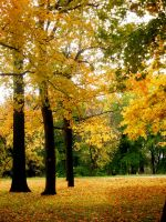 Yellow And Green Fall by 12slauth