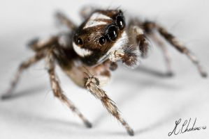 Calm Jumper by mchahine