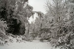 Stock : Winter Woodland Path 5 by Ange1ica-Stock