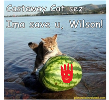 Castaway Cat by ayame4sfr