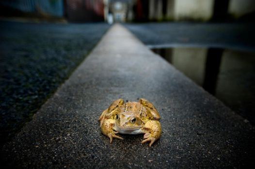 Suburban Frog by andreasandrews