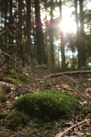 Forest Stock 118 by Malleni-Stock