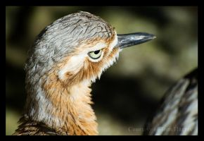 Feather Cut by acutely