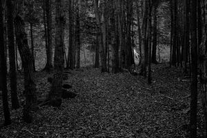 dark woods by fiddler99