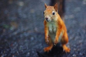 Squirrel by Matt-Reutt