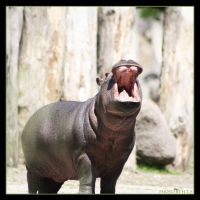 Little Hippo 2 by Globaludodesign