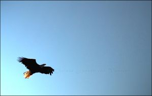 Eagle - Freedom by kingjules71