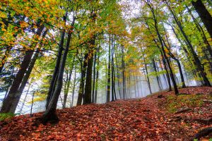 The essence of Fall by mprox
