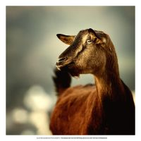 Brown Goat by DREAMCA7CHER