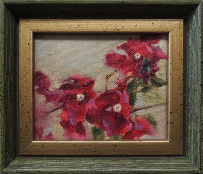 Bougainvilleas by centralunrest