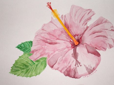 hibiscus 2012 by scooterb63