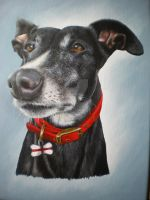 Sid by petportraitman