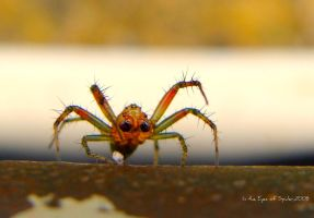 In the Eyes of the Spider by niwaj