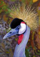 Southern Crowned Crane by WillemSvdMerwe