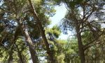 Greece - Crete - Knossos forest (HD) by Ludo38