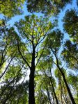 Treetops by scotto