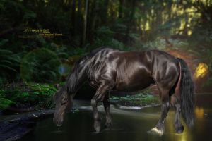 ..it's a secret to find water in a magical forest. by cavallostock
