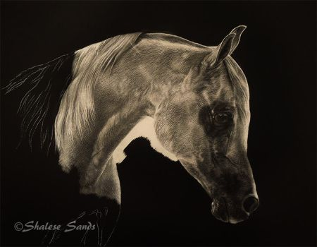 White Arabian WIP by ShaleseSands