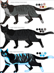 Sterling (cat) colour phases by NinjaKato
