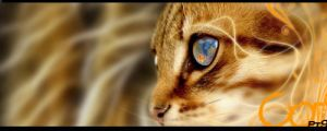 Cat Eye - Signature by Wcreates