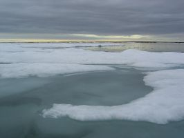 On floating ice 1 by Arctic-Stock